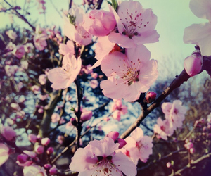 beauty, blumen, and liebe image