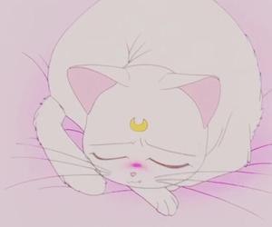 animated, cat, and sleep image