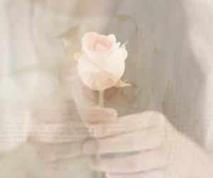 feminine, romantic, and rose image