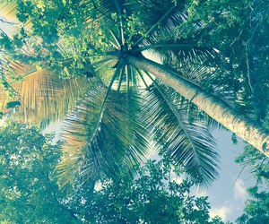 palms, palm trees, and summer image