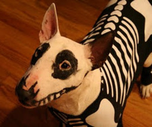 dog and Halloween image