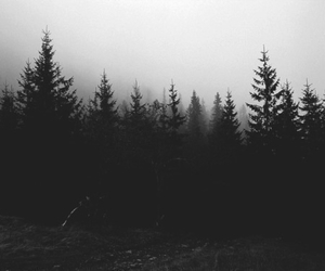forest, black and white, and tree image