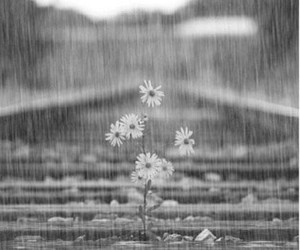 flowers, rain, and gif image