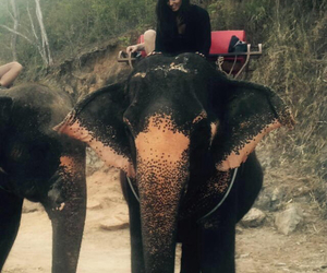 sophia smith, liam payne, and elephant image
