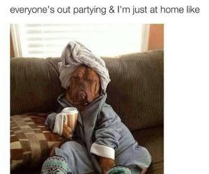 funny, dog, and home image