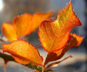hojas image