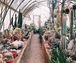 cactus, nature, and green house image