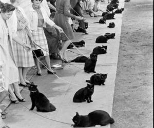 black cats, cats, and retro image
