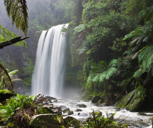 Amazon, waterfall, and forest image