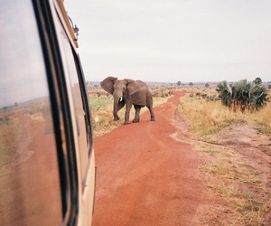 travel, summer, and elephant image