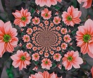 flowers, pink, and trippy image