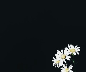 background, lock screen, and daisy image