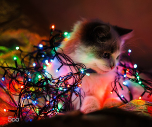 cats, christmas, and colorful image