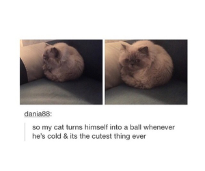 animals, ball, and cats image