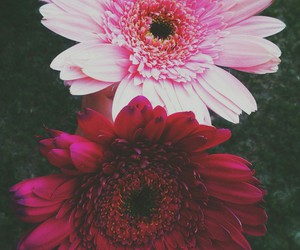 beautiful, flowers, and I love them image