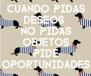 love, frases, and oportunidades image