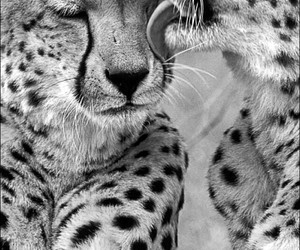 animal, love, and nature image