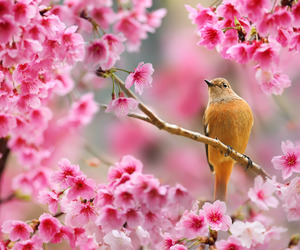 bird, spring, and cute image