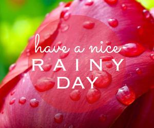 beautiful, rain, and rose image