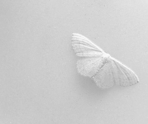 butterfly and white image