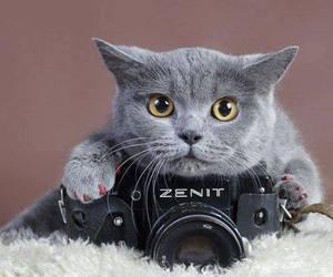 cat and camera image