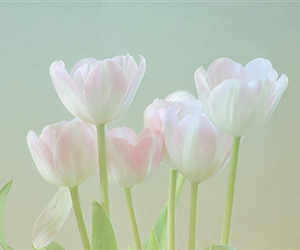 botanical, flowers, and happy image