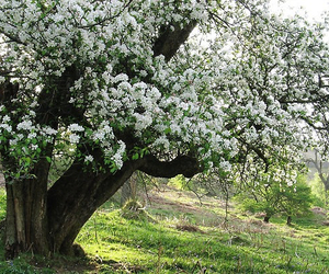 nature and spring image