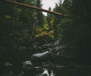 beautiful, grunge, and nature image