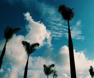 beach, sky, and trees image