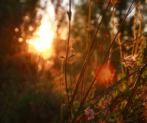 field, sunrise, and flowers image