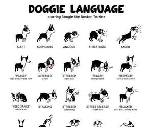 dog and language image