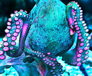 octopus, ocean, and animal image