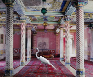 bird, india, and karen knorr image