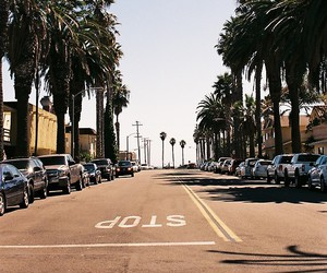 cars, city, and palms image