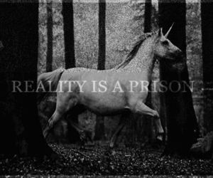 unicorn, reality, and prison image