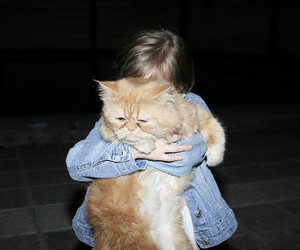 cat and hug image