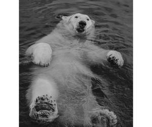 bear, Polar Bear, and relax image