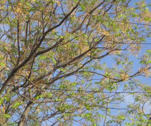 arbol, green, and tree image