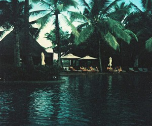 summer, holiday, and palm trees image
