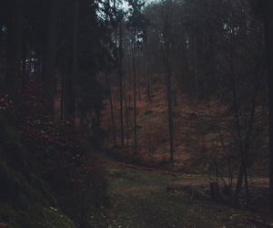 forest, mysterious, and mystic image