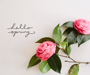 spring, march, and roses image