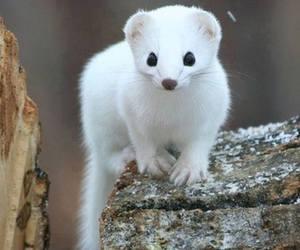 animal, white, and cute animals image