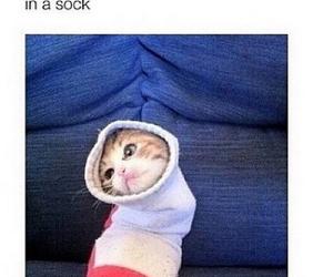 cat, cute, and socks image