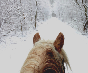 horse, snow, and gallop image