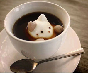 cat, coffee, and chantilly image