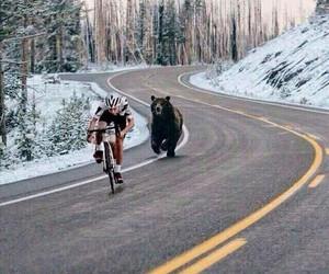 bears and bikes image