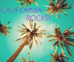 california palm trees image