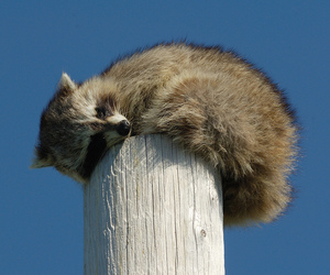 animal, beautiful, and sleeping image