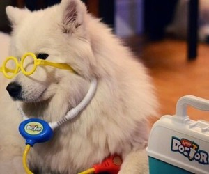 dog and doctor image