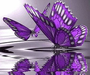butterfly, purple, and water image